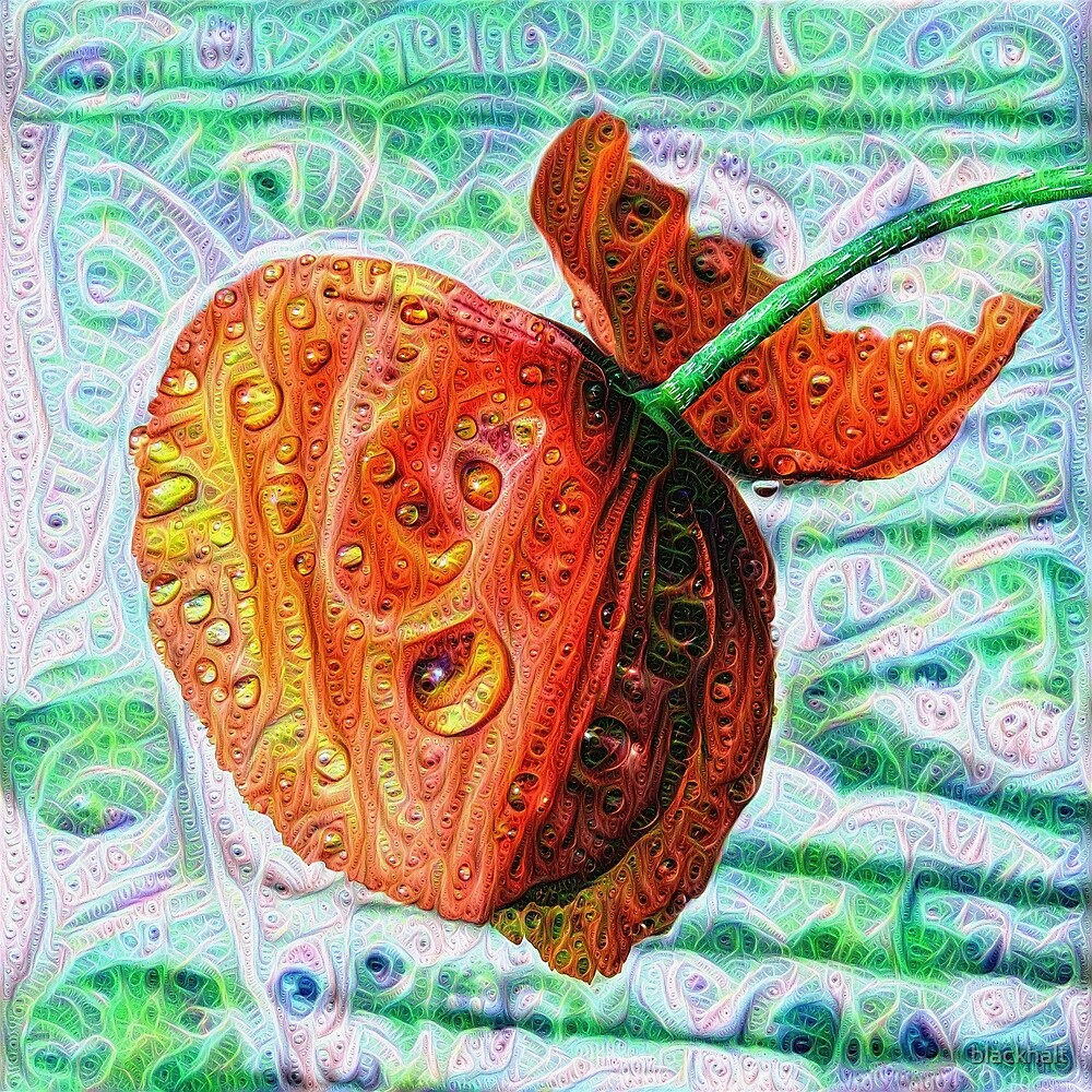#DeepDreamed Flower 5x5K v1449147619 by blackhalt