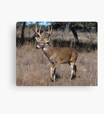 White Tail Deer Canvas Print
