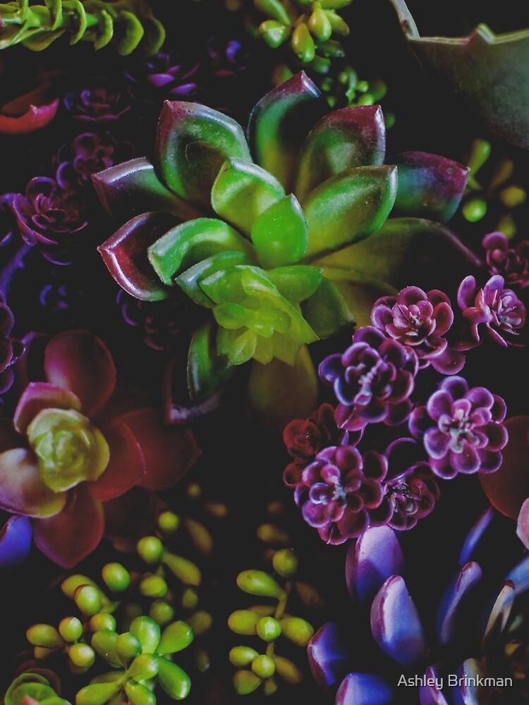 Succulent Love by ashleyrbrinkman