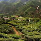 Cameron Highlands Tea Plantation III by zhao wei koh