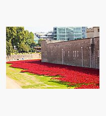 Ceramic poppies at the Tower of London Photographic Print