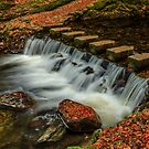 Stepping Stones, Tollymore Forest Park by Adrian McGlynn