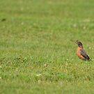 Robin on Bug Patrol by Ben Waggoner