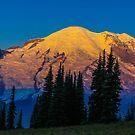Sunrise on Mt. Rainier by Shari Galiardi