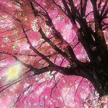 Pink  Maple Tree For Katie S. A Memorial   by digiphotos