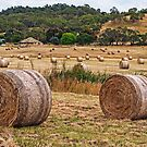 Made Hay While the Sun Shined - Now Baled Up by TonyCrehan