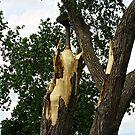 Broken Tree by Shulie1