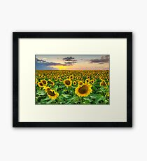 Sunflower Images - A Field of Golden Texas Wildflowers Framed Print