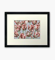 Tulipomania - Der Semper Augustus Gerahmtes Wandbild
