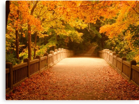 Bridging the colors by Tracy Jule by Tracy Jule