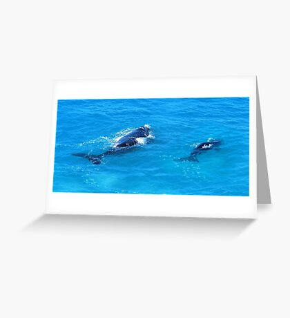 'Southern Right Whales' Greeting Card