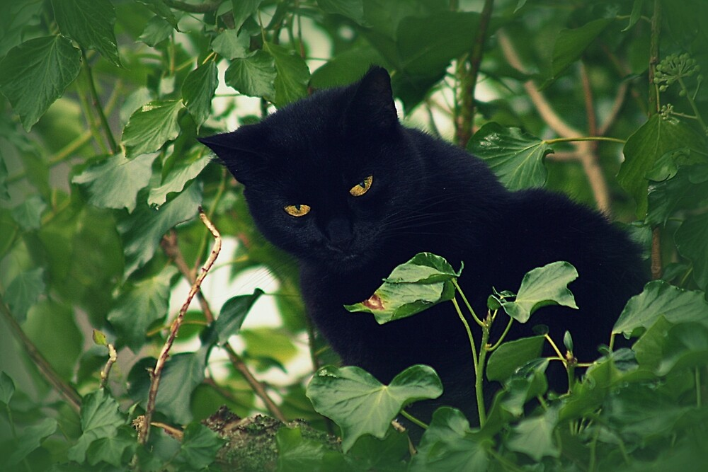 Sooty amongst the leaves by franceslewis