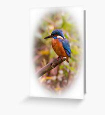 Eurasian Kingfisher Greeting Card