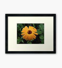 Wet flower Framed Print