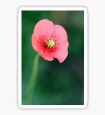 Wild Red Poppy - Close Up Sticker