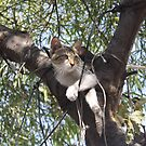 Bi-Color Tabby Cat In Tree by taiche