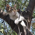 Bi-Color Tabby Cat In Tree 2 by taiche
