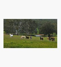 Rural Bliss Photographic Print