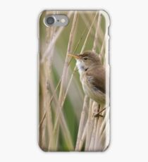 Eurasian Reed Warbler (Acrocephalus scirpaceus) singing from a reedbed. iPhone Case/Skin