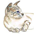 tabby point siamese cat by mindgoop