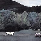 Buffalo Horse Mindscape by Wayne King