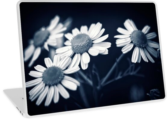 Just Daisies by Vicki Field