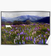 High Country Lupine Dreams Poster