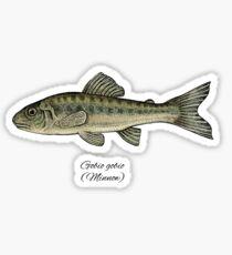 Minnow. Sticker