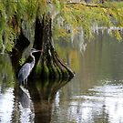 Great Blue Heron by Asoka