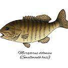 Smallmouth bass by Eugenia Hauss