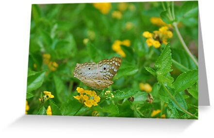 White butterfly on yellow flowers by Ben Waggoner