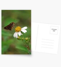 Brown butterfly on Spanish Needles Postcards