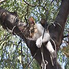 Bi-Color Tabby Cat In Tree 5 by taiche