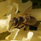 Pollen 2 by D-GaP