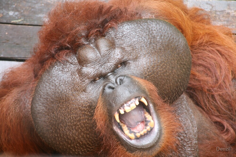Aman the orang utan by Denzil