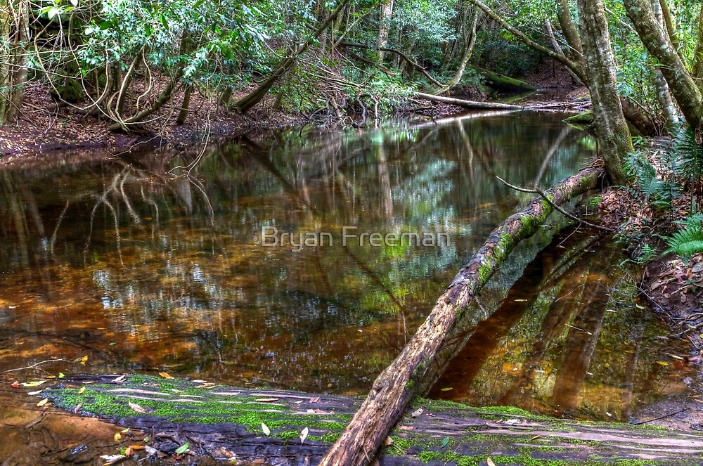 Downstream - Rainforest - NSW - Australia by Bryan Freeman