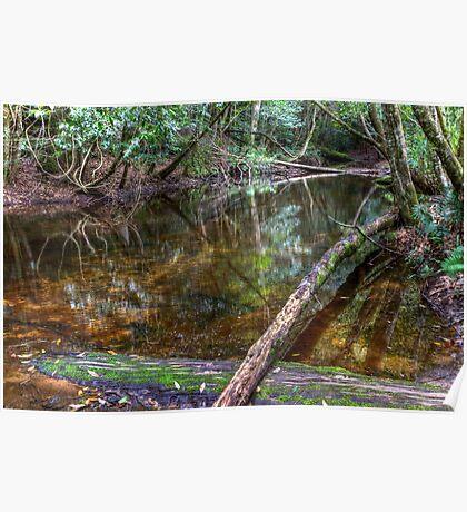 Downstream - Rainforest - NSW - Australia Poster