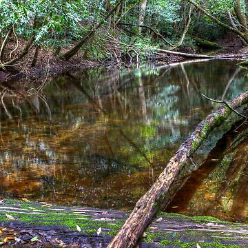 Downstream - Rainforest - NSW - Australia by BryanFreeman