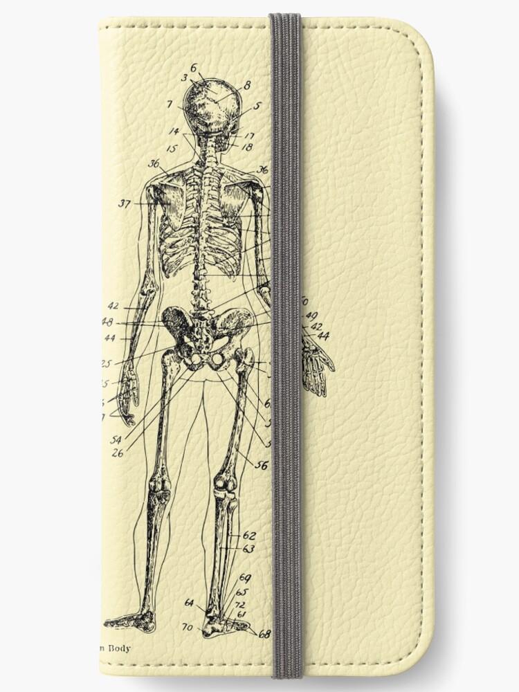 Anatomie: Das Skelettsystem Ver.Bone\