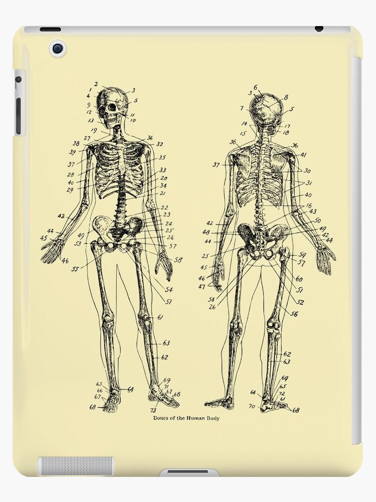 Anatomy The Skeletal System Verne Ipad Cases Skins By Schwaz
