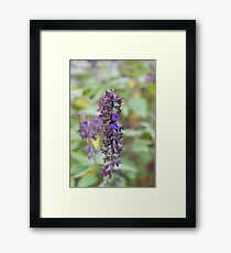 Single lavender Framed Print