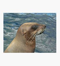 Australian Fur Seal Photographic Print