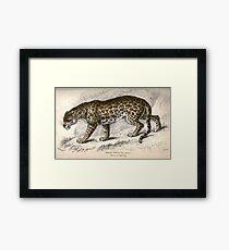 Felis Onca (The Jaguar) Framed Print
