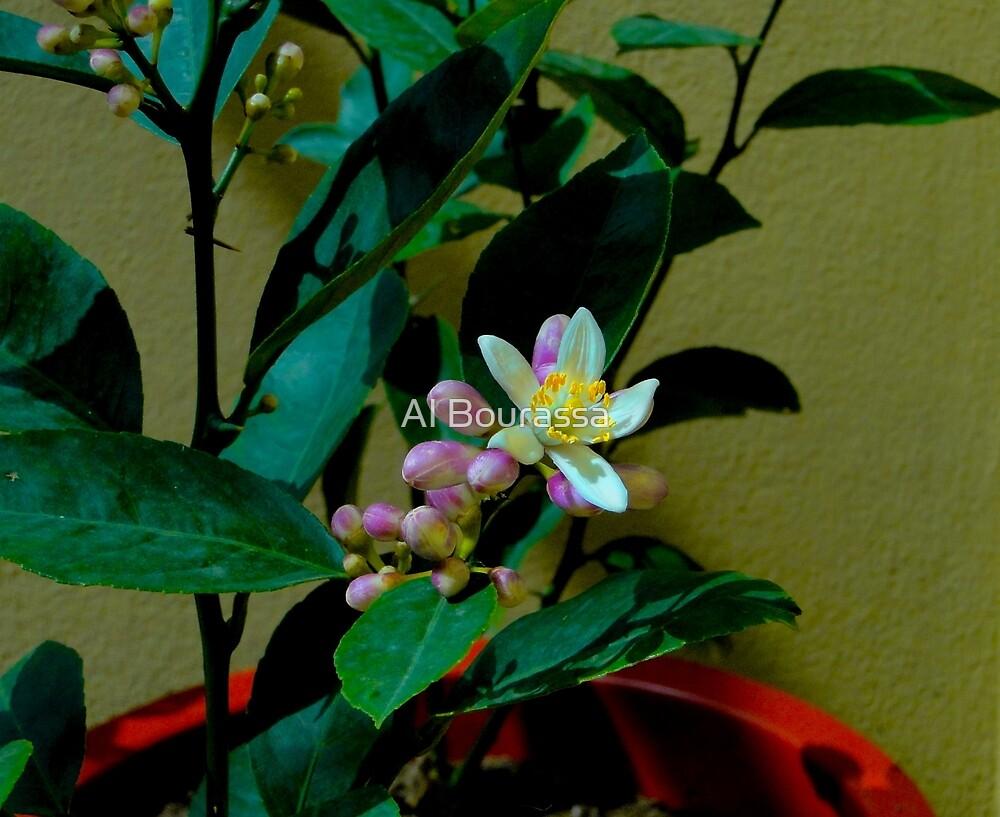 Lemon Tree Flower by Al Bourassa
