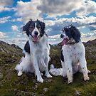 Rocky Friends by Zort70