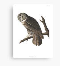 Great Gray Owl -  Canvas Print