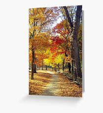 Autumn foliage in Central Park  Greeting Card