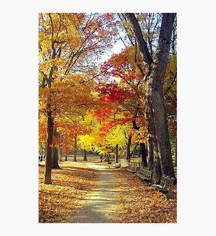 Autumn foliage in Central Park  Photographic Print