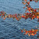 Autumn Leaves at  Brome Lake, Quebec, Canada 2014 by Heather Friedman
