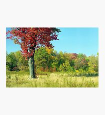 Red Autumn Tree Photographic Print